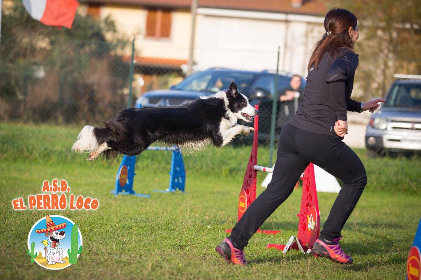 Addestramento cani versilia el perro loco for Lavorare con i cani