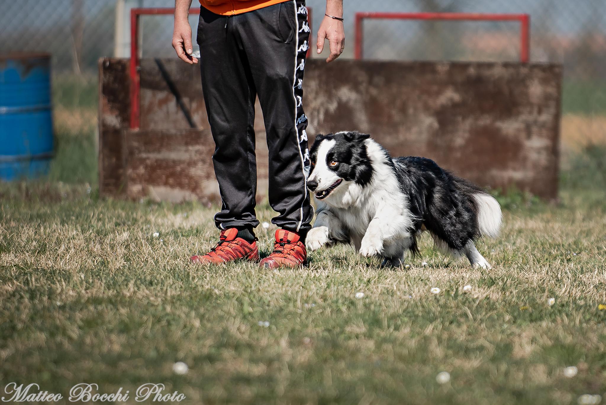 Luca Bartelloni (2)